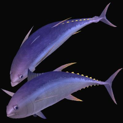 3d yellowfin kihada