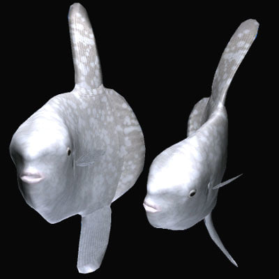 3d model headfish manbou