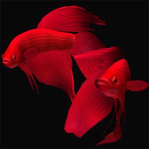 3d red betta model