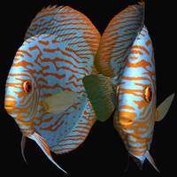 turquoise discus 3d model