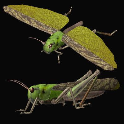 3d model grasshopper tonosama