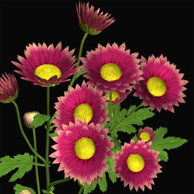 3ds max chrysanthemum kiku