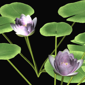 3d model of water lily suiren