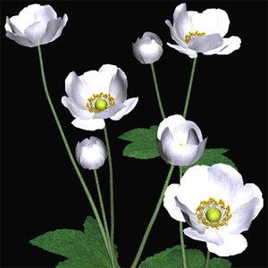 anemone syumeigiku 3d 3ds