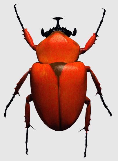 scarab beetle pz3
