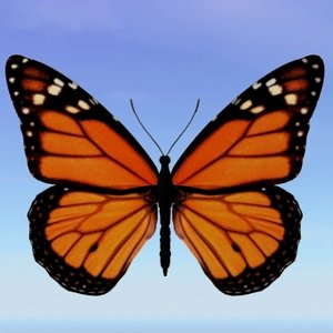 butterfly monarch 3d model
