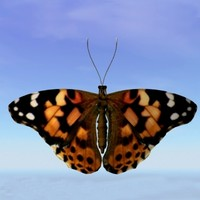 3d butterfly painted lady model
