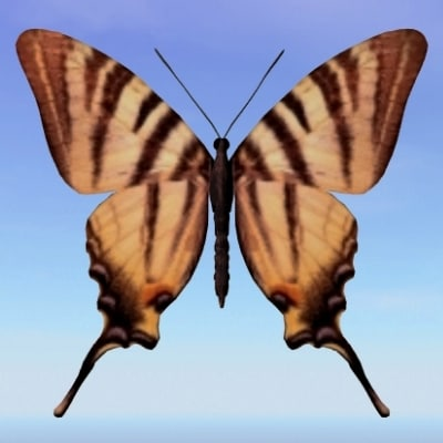 butterfly scarce swallowtail 3d max