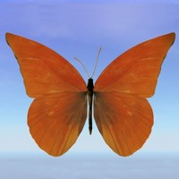 butterfly troides 3d lwo
