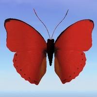 butterfly cymothoe hypatha 3d lwo