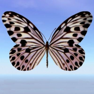 3d model butterfly ideopsis