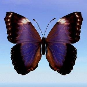 lwo butterfly morpho violacca