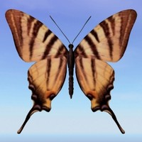 3d model butterfly scarce swallowtail