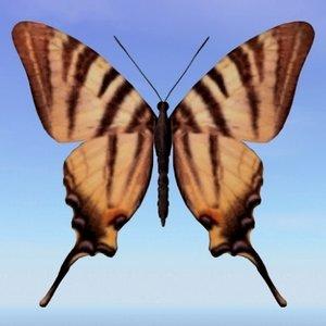 3d model butterfly scarce swallowtail