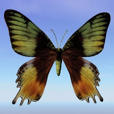 butterfly cyrysiridia 3d model