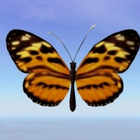butterfly heliconius 3d model