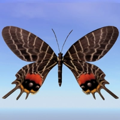 butterfly trogonoptera 3d obj