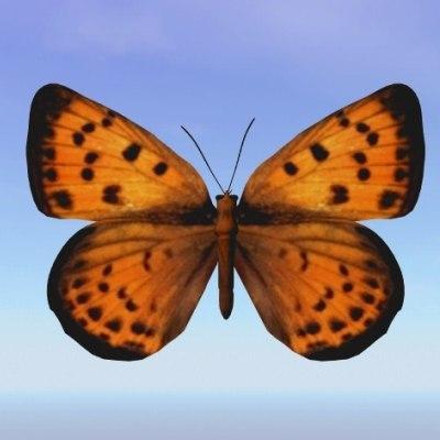 3d butterfly peacock model