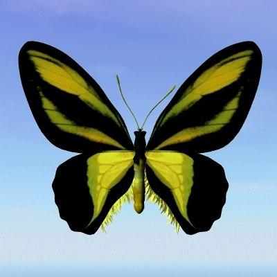 butterfly orinithroptera obj