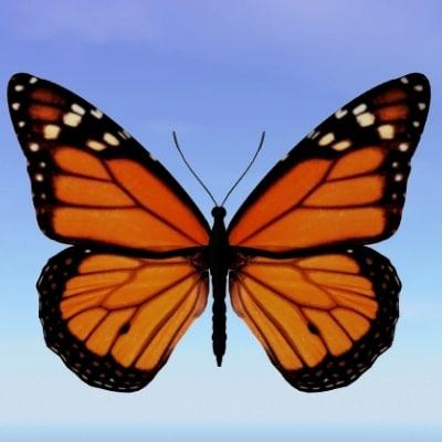 butterfly monarch 3d model
