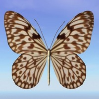 3d model butterfly loxolomia