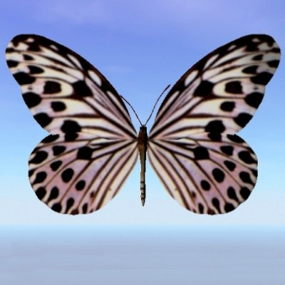 3d 3ds butterfly ideopsis