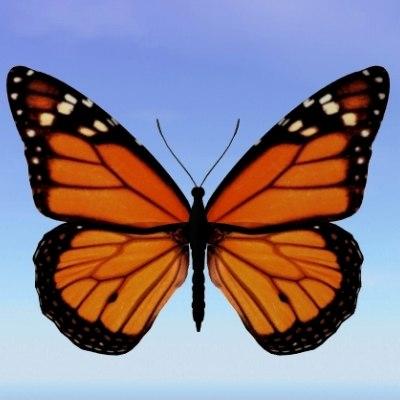 3d butterfly monarch