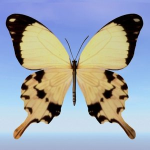 butterfly papilio 3ds