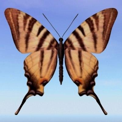 3d butterfly scarce swallowtail