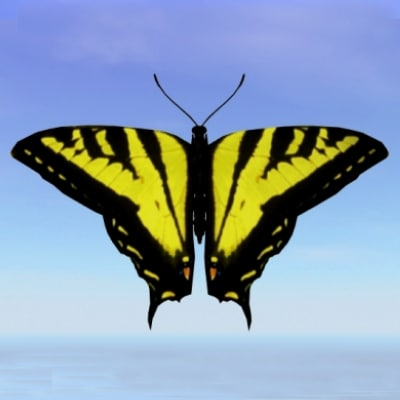 butterfly tiger swallowtail 3d model