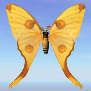 moth argema 3d model