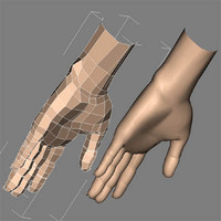 hand female max