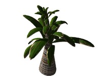3d tropical plant tree