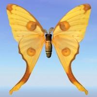moth argema 3d max