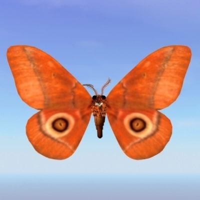 moth gonimbrasia belina 3d model