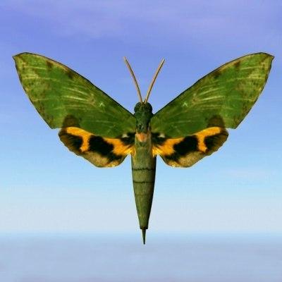 3ds max moth euchloton