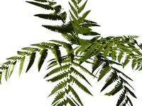 3d furn plant model