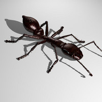 3d dxf ant