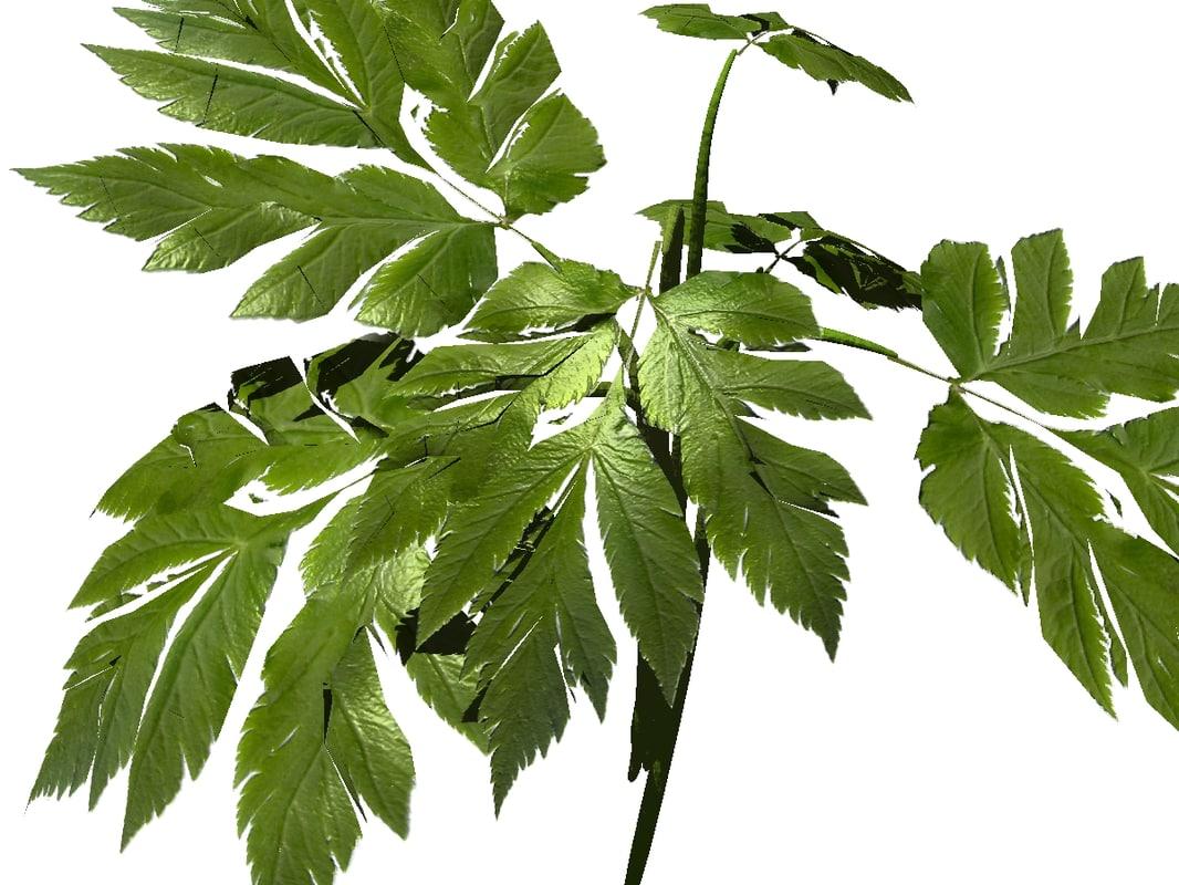 lwo plant forrest