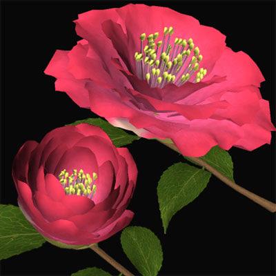 3d camellia yukitubaki