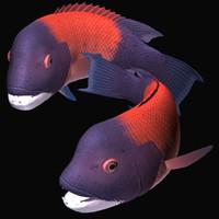 3d sheephead fish model