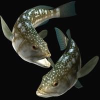 3d kelp bass model