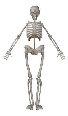 lightwave human skeleton