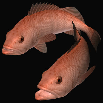 bocaccio fish 3d model