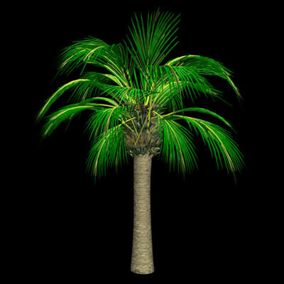 lwo palm tree