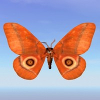 moth gonimbrasia belina 3ds