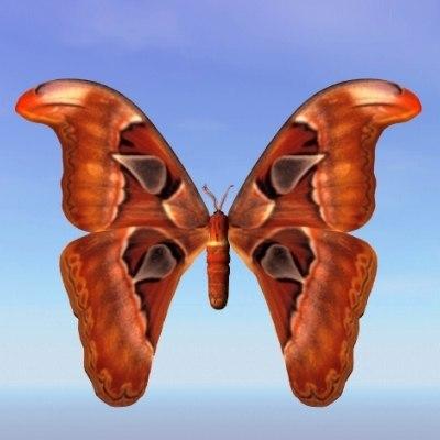 moth bhutntis 3d model