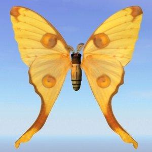 3d obj moth argema