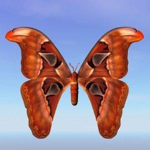3d moth bhutntis