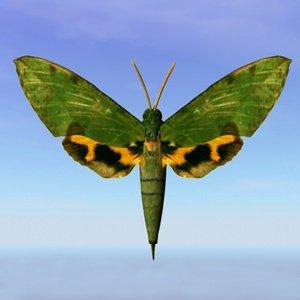 moth euchloton 3d obj